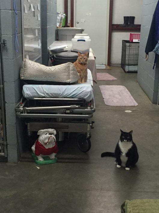 Central Veterinary Hospital
